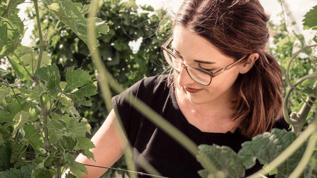 Anna Faber konzentriert bei der Arbeit im Weingarten