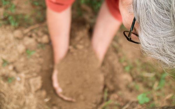 Maria Faber-Köchl packt Erde im Weingarten an
